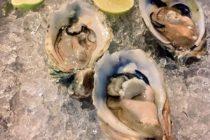 バリでも生牡蠣食べれますサンセットロードにある「さかなや」水槽からダイレクトに取り出したのを1個ずつオーダーできます(1個二百円くらい)日本のものより小粒ですが 磯の香りはバッチリレモンと醤油を少し垂らして召し上がれ#bali #バリ島