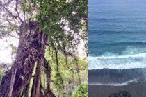 バリ島最強パワースポット2つご存知ですか?エカ植物園のガジュマルの樹ウルワツのエイトビーチ知る人ぞ知る⋯⋯当たり前ですね笑ご興味ある方はおもてなしバリのwebサイトへお越しくださいねhttp://www.omotenashi-bali.com/ #bali  #バリ島ガイド  #バリ島