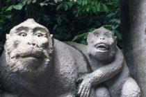 ウブドの人気スポットモンキーフォレスト沢山のお猿さんと触れ合えますしかしこのお猿は⋯⋯ほとんど人ですね⋯⋯ #bali #バリ #バリ島 #バリ島ガイド #おもてなしバリで検索
