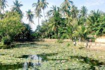 パダンバイ港近くの「LOTUS POND」睡蓮が咲き乱れる美しい池その先すぐには海が見えます#おもてなしバリで検索