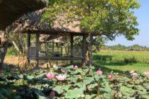 ウブドの『janggar ulam』見渡す限りの田園風景を眺めながらランチやティタイムを楽しめますポークリブがジューシーでオススメですおもてなしバリではこちらがランチに含まれたオプショナルツアーもありますので どうぞお問い合わせくださいね!#バリ島 #バリ #bali #ubud