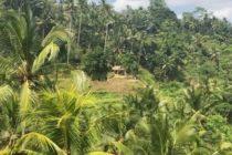 本日のテガララン晴天🌞爽やかなかぜが吹き抜けてます#バリ #バリ島 #バリ観光 #テガララン #ウブド #baliswing